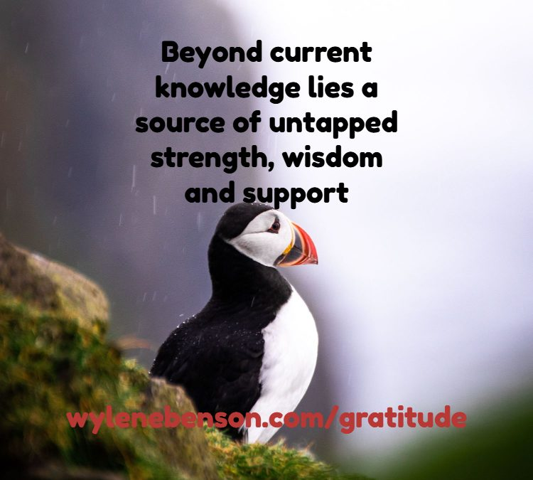Gratitude For Knowledge Beyond My Own