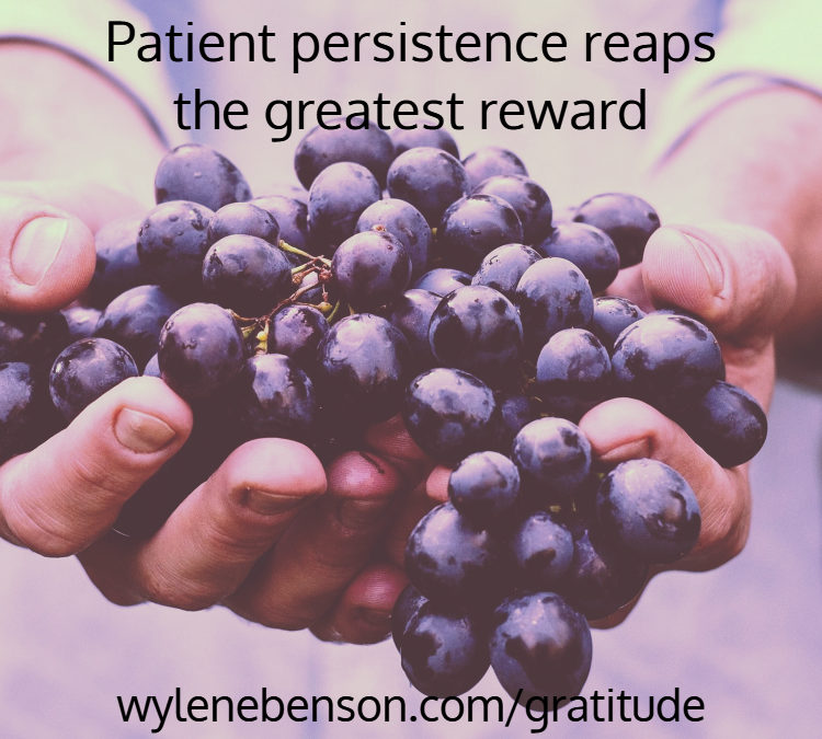 Gratitude For Progressing With Persistence