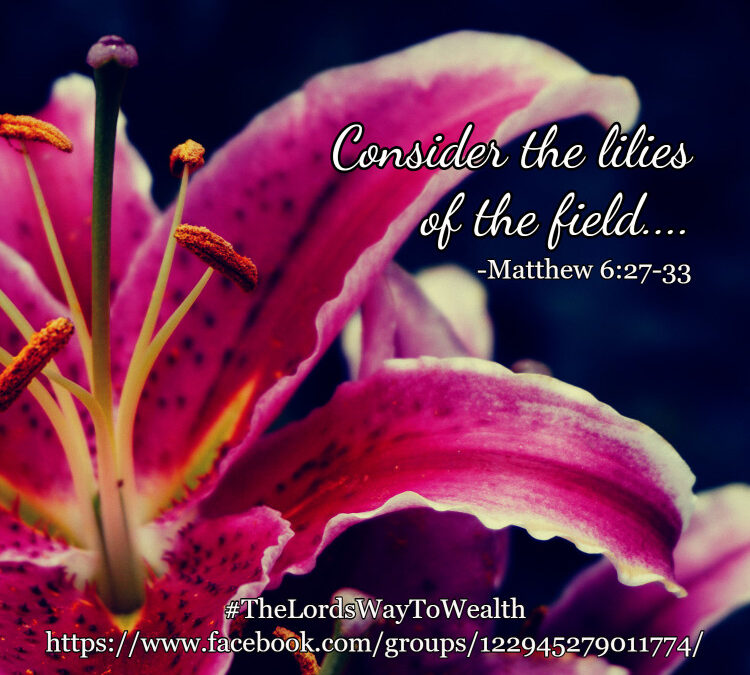 Consider the Lilies…
